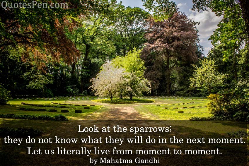 look-at-the-sparrows-quote