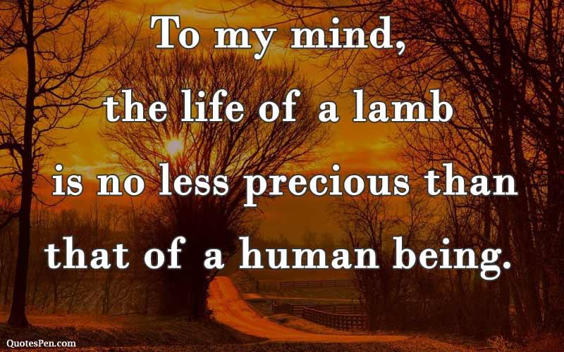 life-of-a-lamb