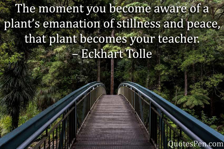 moment-emanation-Good Morning Nature Sayings