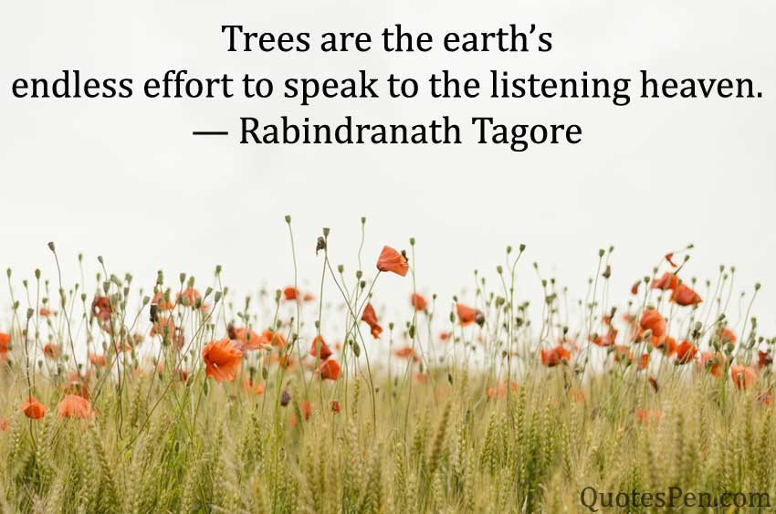 trees-are-the-earths
