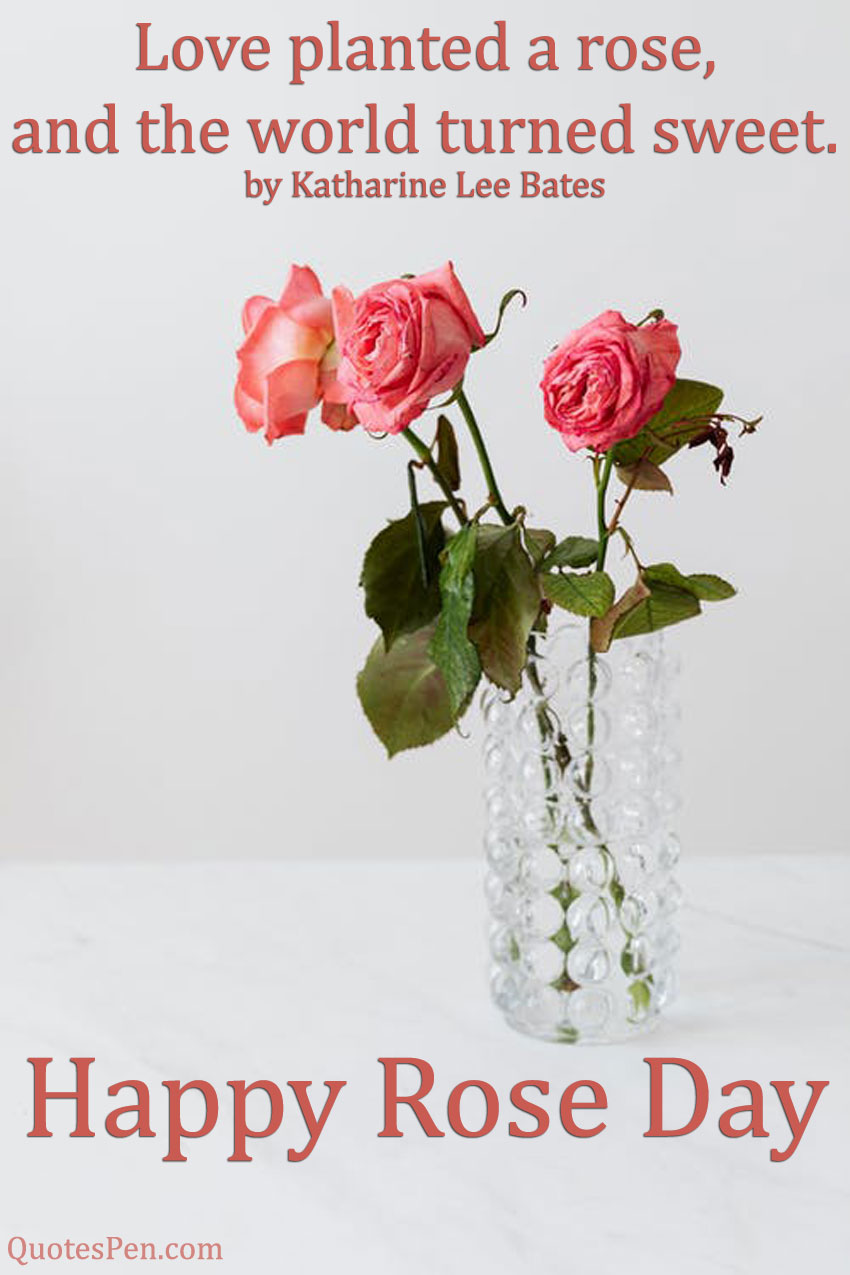 love-planted-a-rose-quote