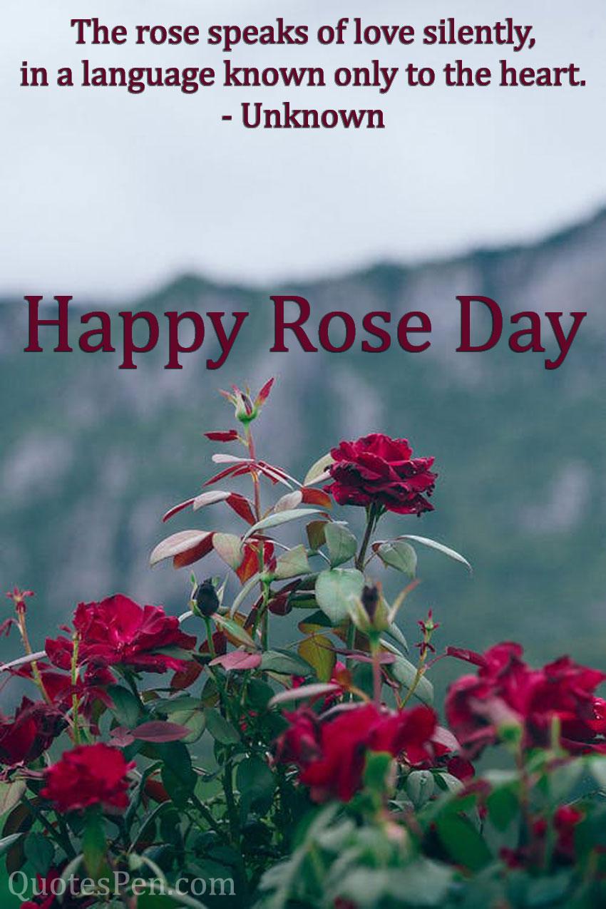 rose-speaks-of-love-silently