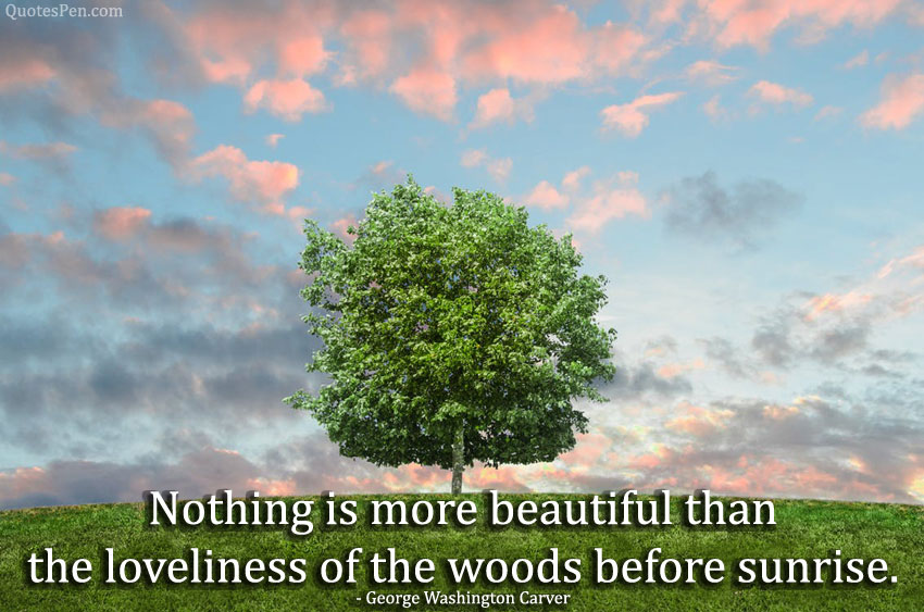 happy-environment-day-quotes
